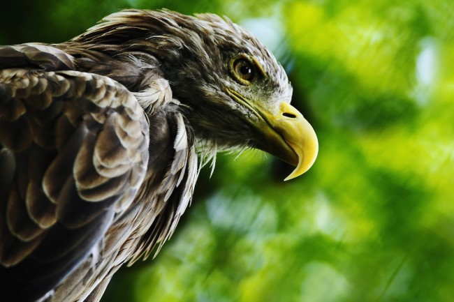鷹の目で記事をチェックせよ