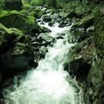なんと美しい清流でしょうか。静謐な緑と、ダイナミックな水の流れの対比がすばらしい。